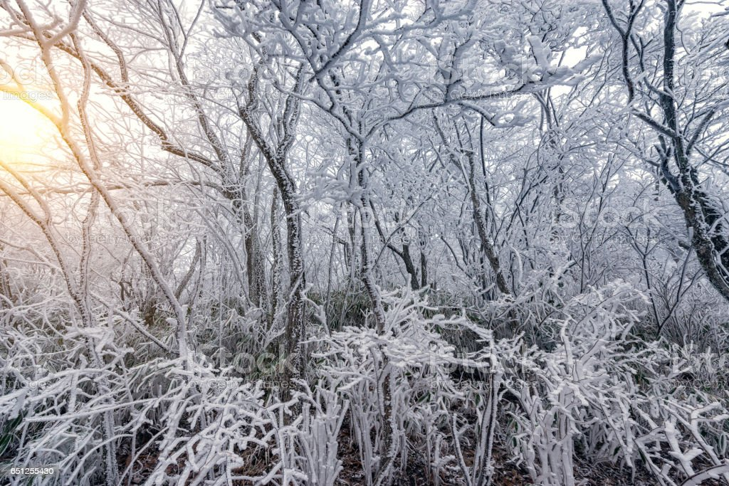 Frozen branches of the trees. stock photo