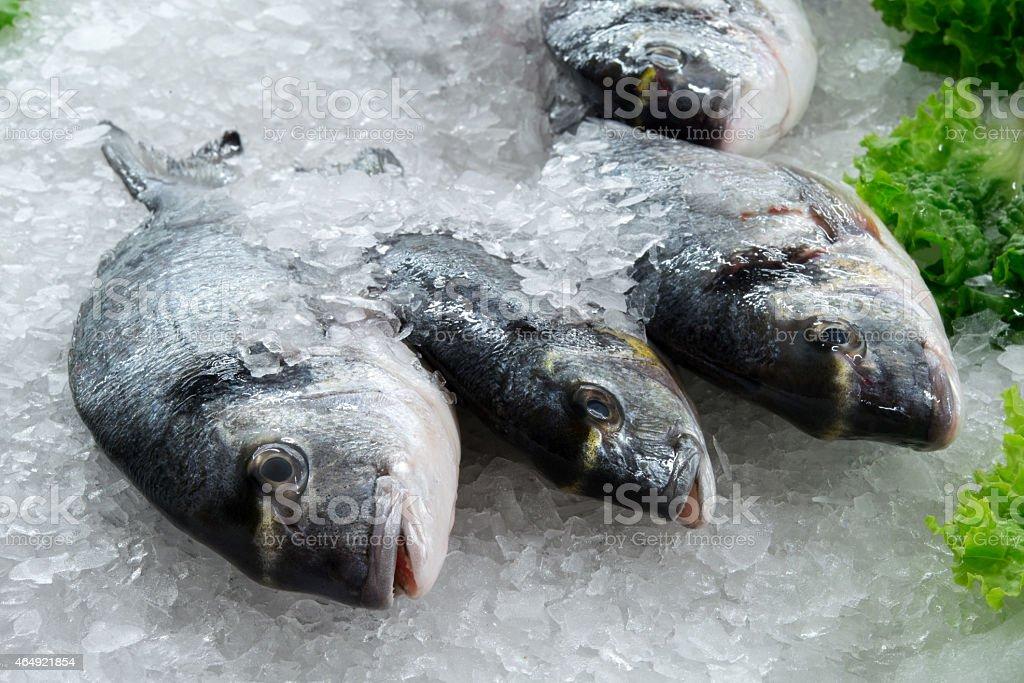 frozen bream fish on ice stock photo