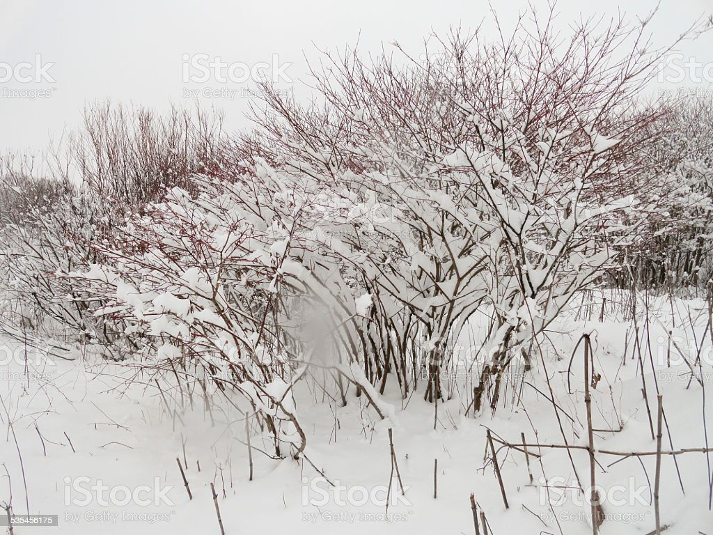 Frozen bush stock photo