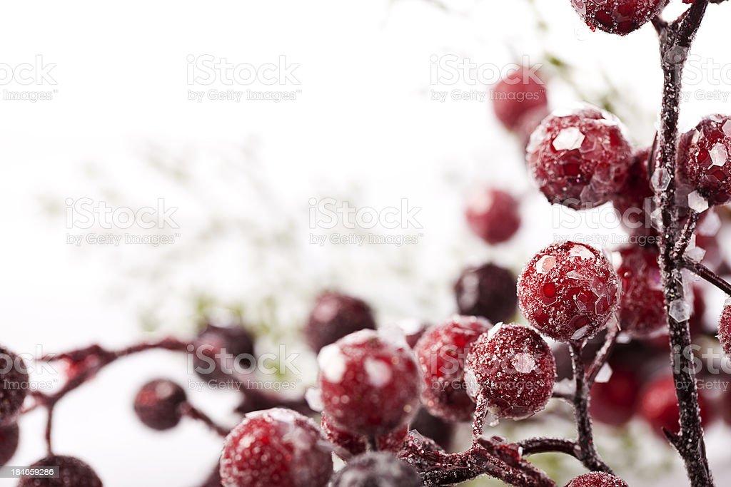 Frozen Christmas Berries stock photo