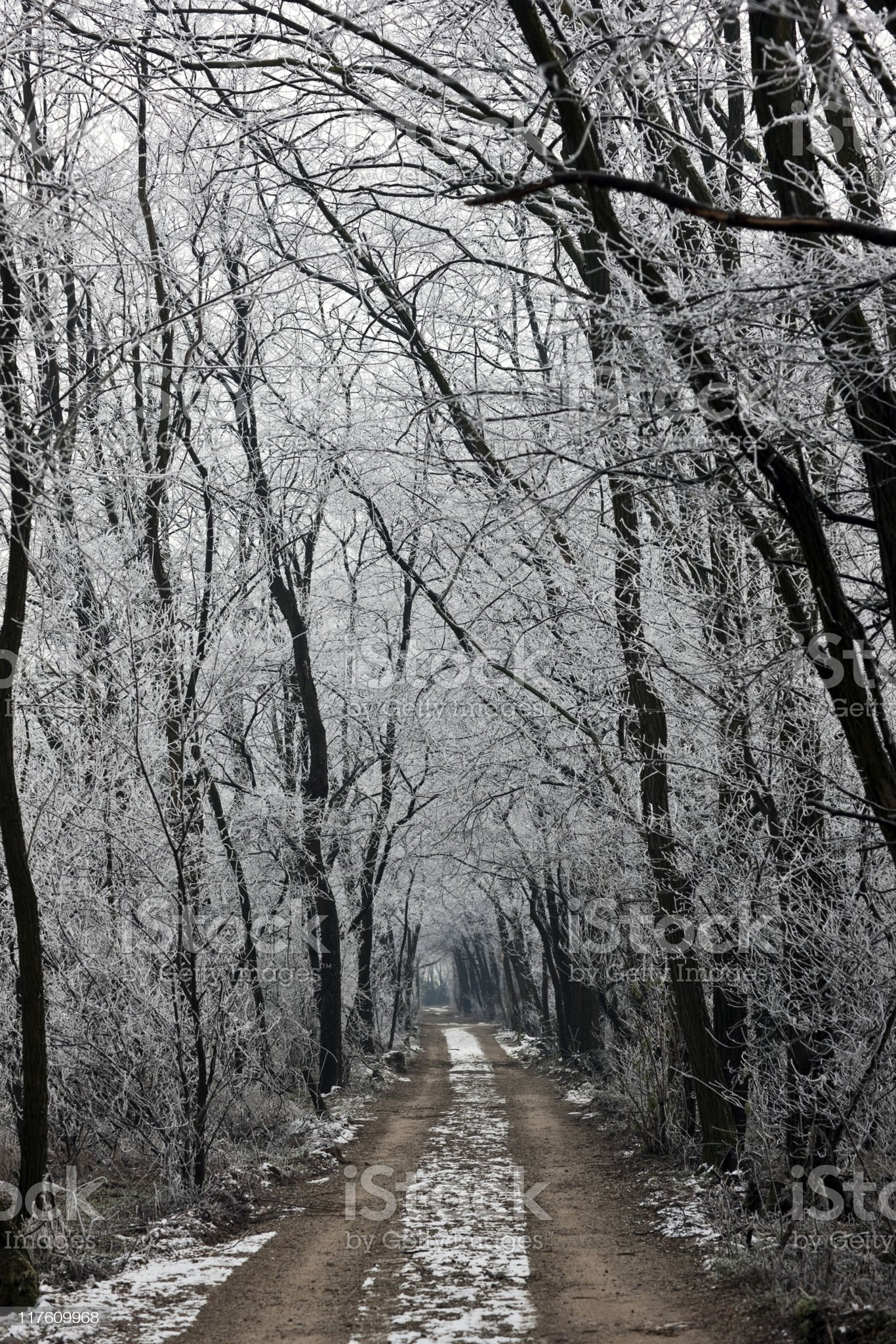 Frozen Country Road. Color Image royalty-free stock photo
