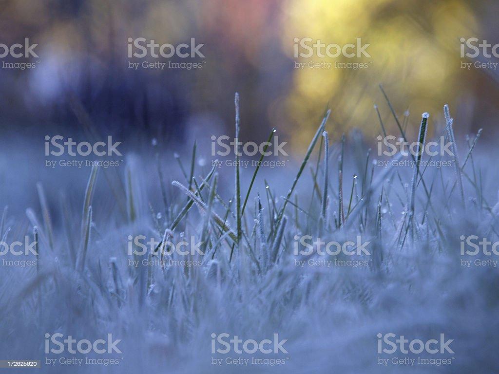 Frozen Dew 3 royalty-free stock photo