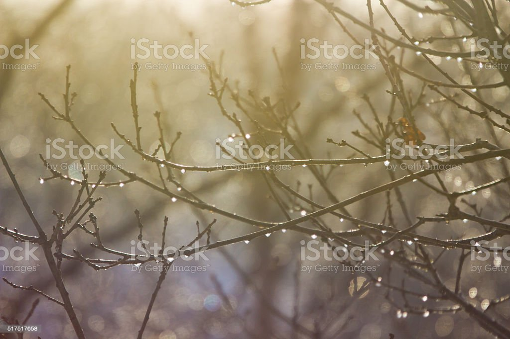 Frozen Dewdrops and Winter Branches stock photo