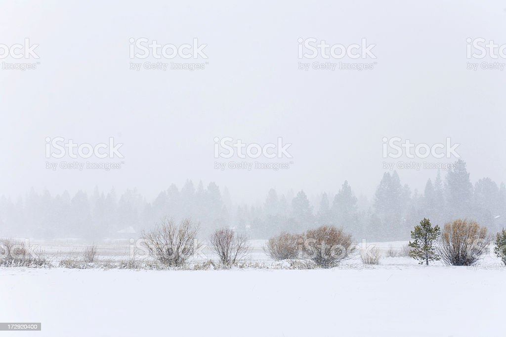 Frozen Field during a snowstorm. Sunriver, Oregon royalty-free stock photo