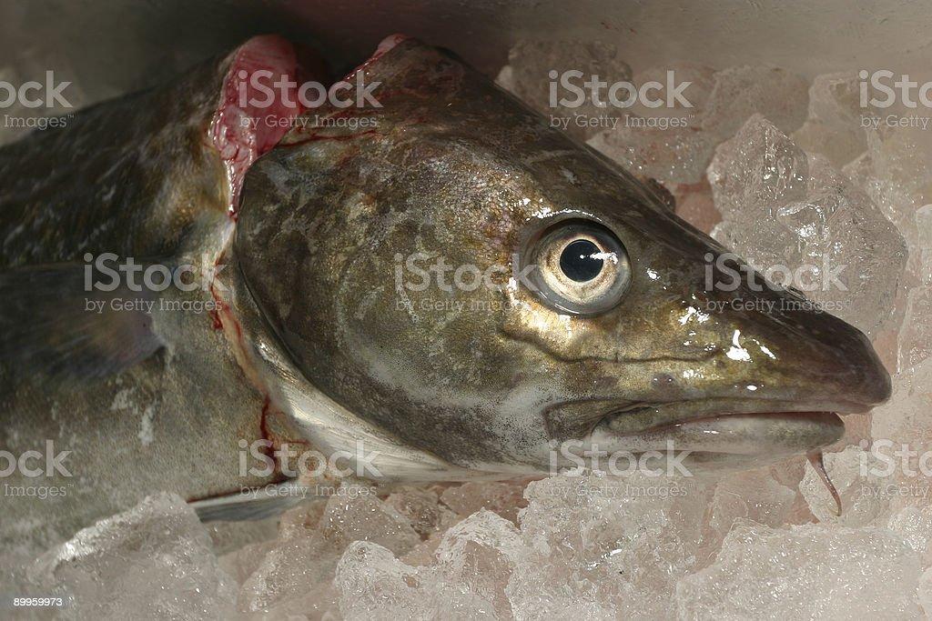 Frozen Fish Head royalty-free stock photo