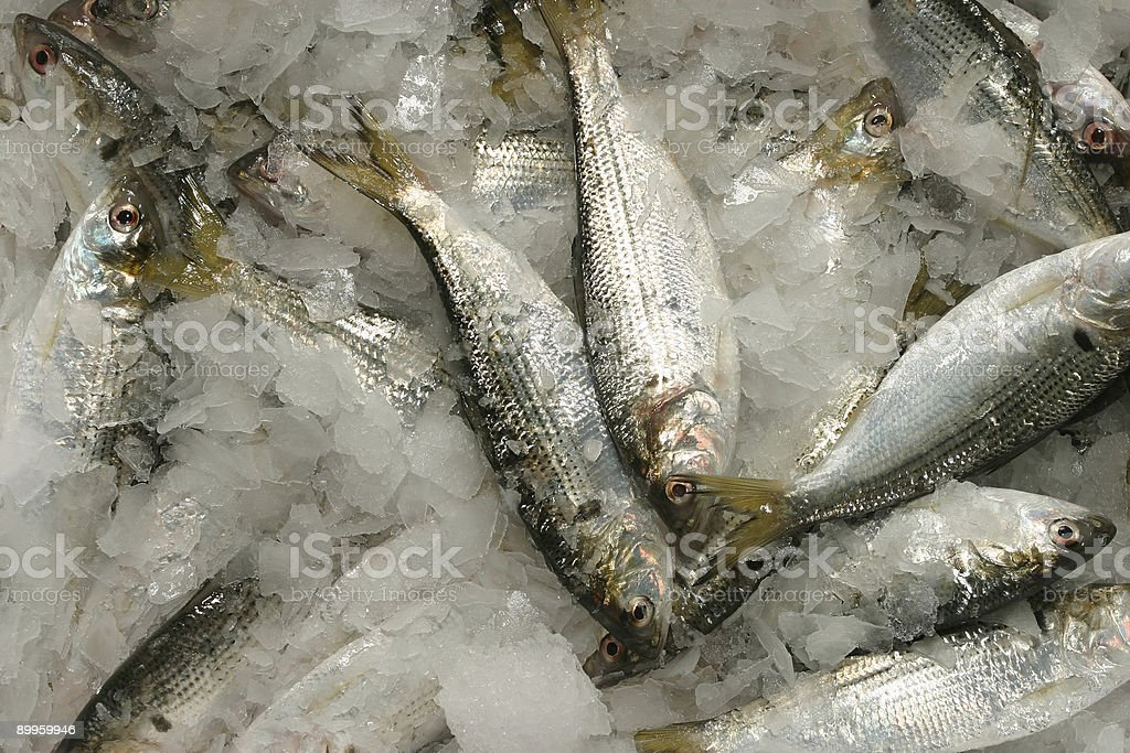 Frozen fishes for sale royalty-free stock photo