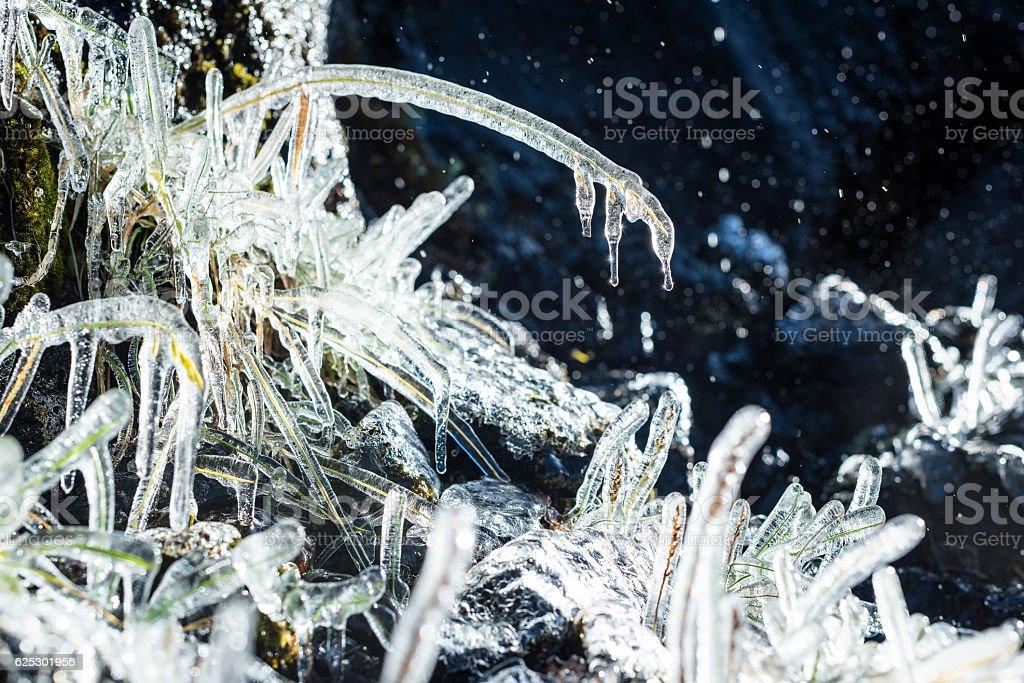 Frozen Flowers stock photo