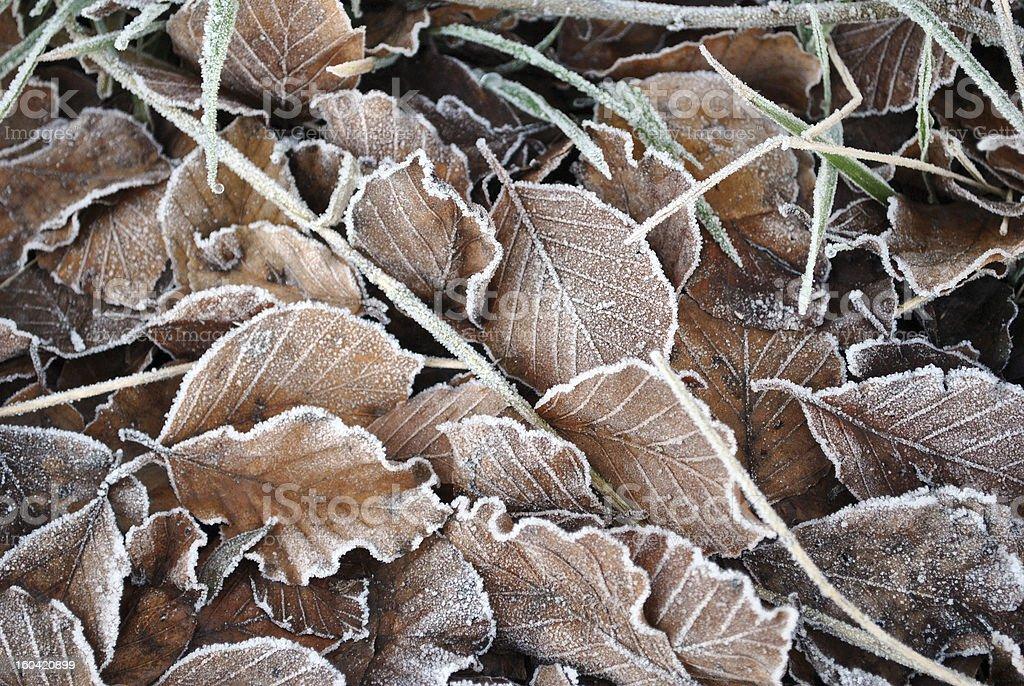 frozen foliage background royalty-free stock photo