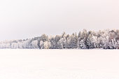 Frozen Forest by River