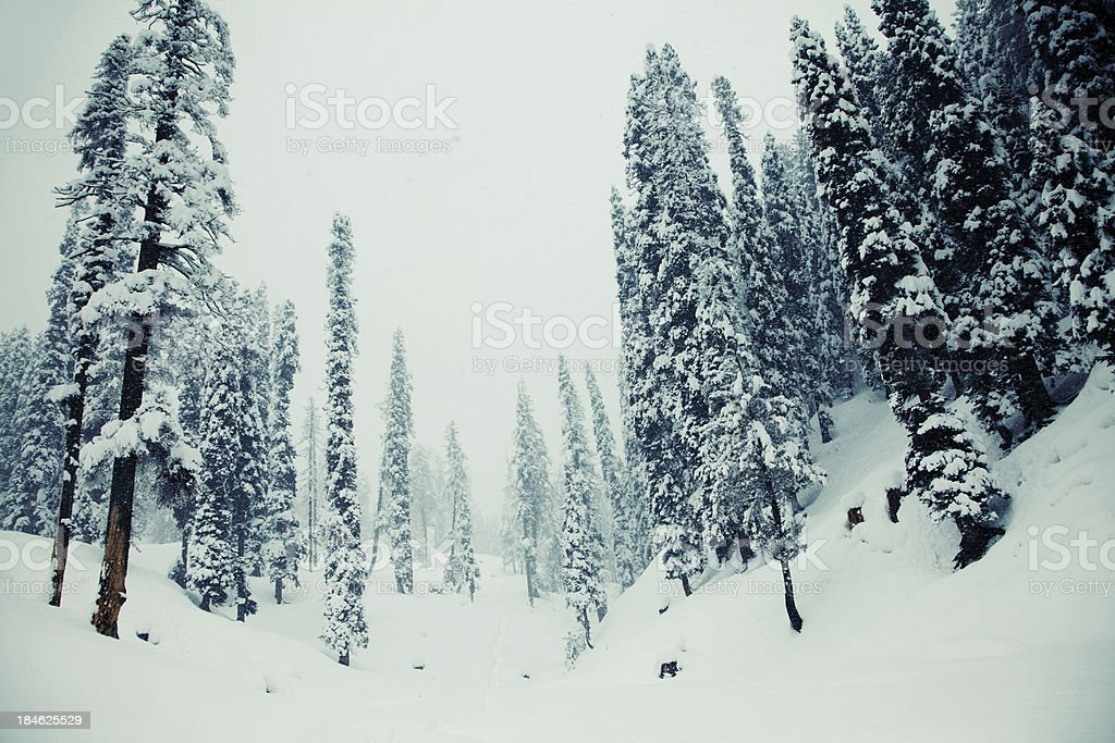 Frozen forest stock photo