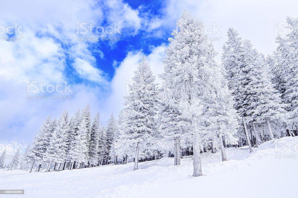 Frozen forêt photo libre de droits