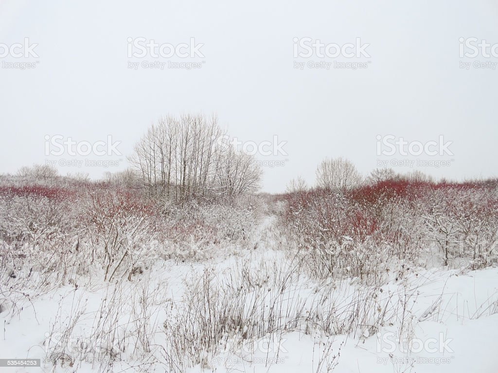 Frozen Grass and Trees stock photo