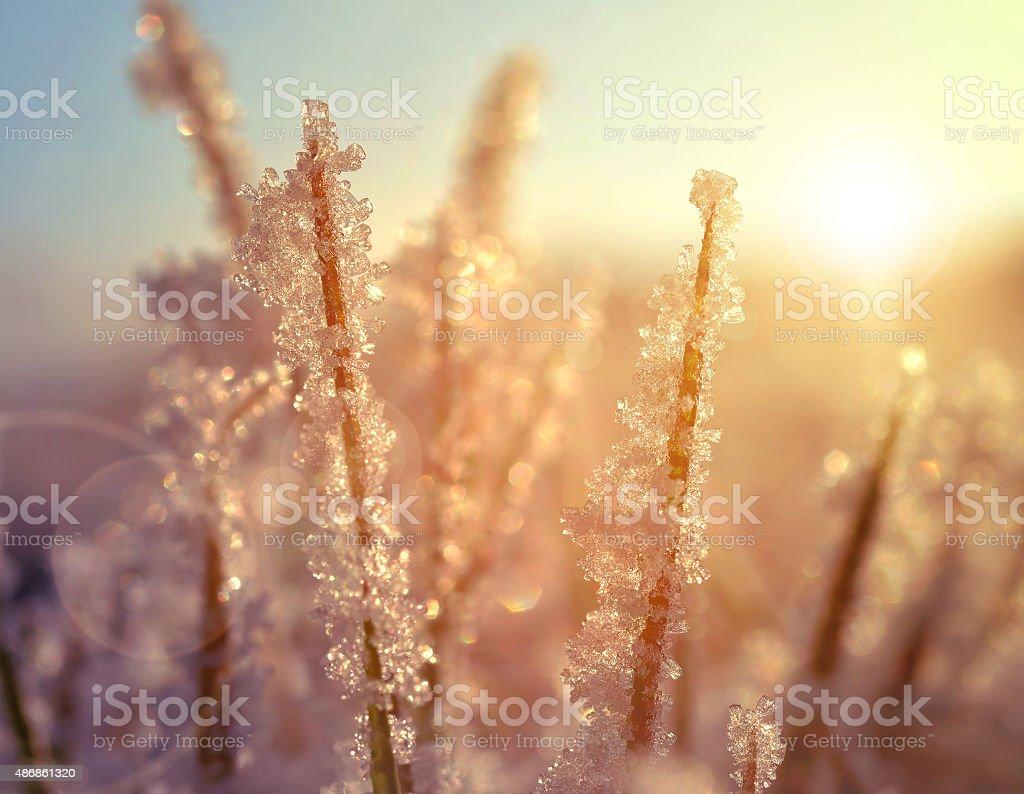 Frozen grass at sunrise close up stock photo
