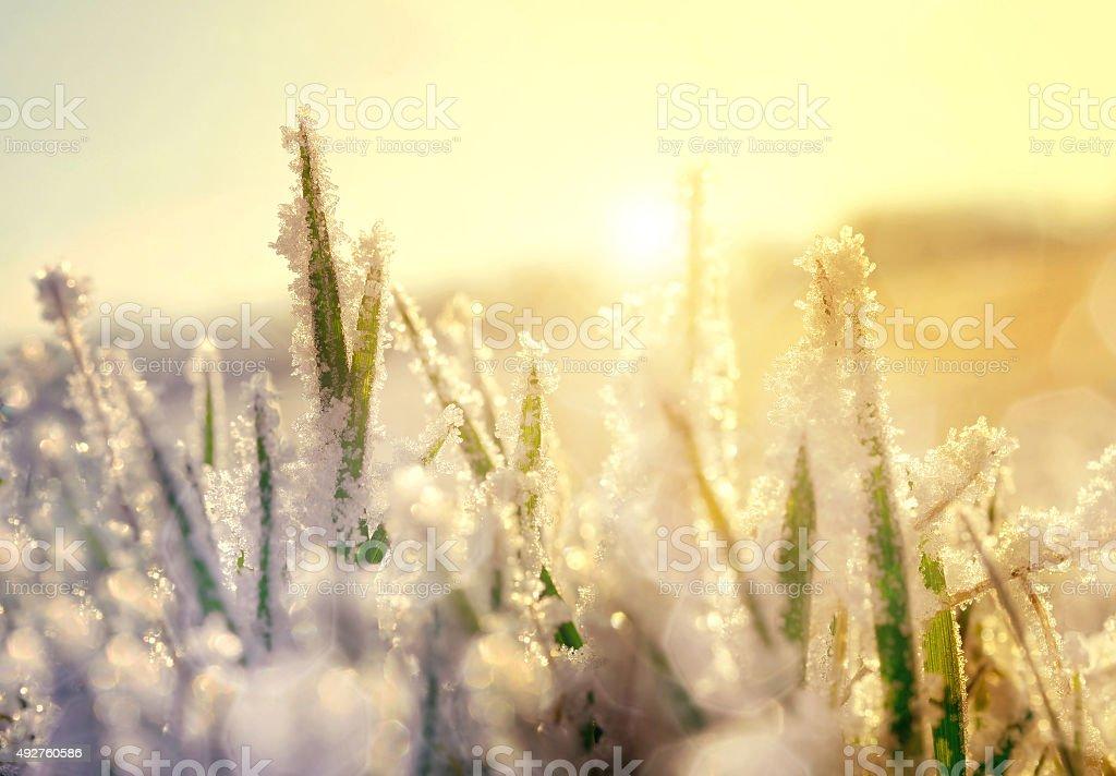 Frozen grass at sunrise close up. stock photo