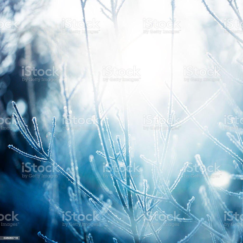 Frozen grass background stock photo