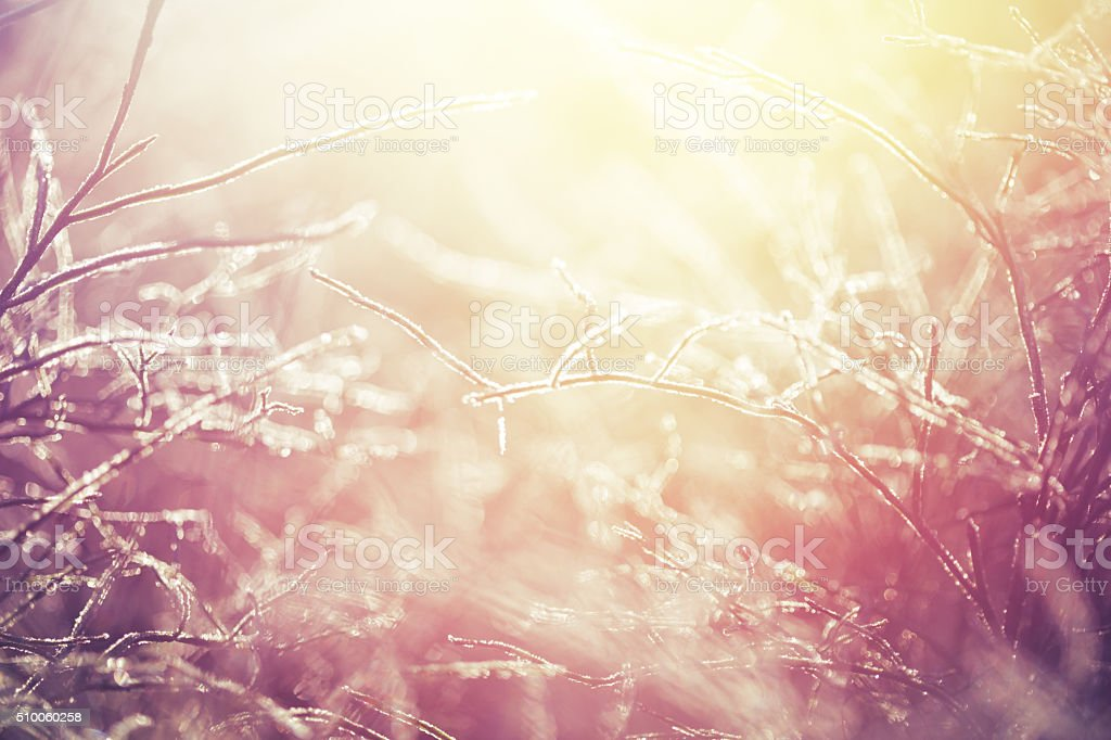 Frozen grass background stock photo