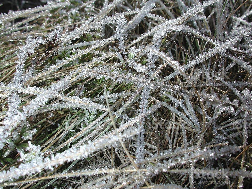 Frozen grass detail stock photo