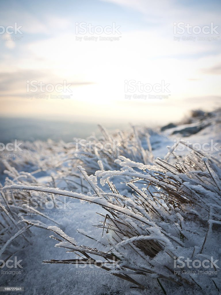 Frozen grass royalty-free stock photo