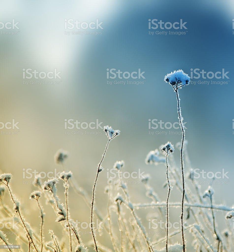 Frozen grass stands tall despite the winter weather  stock photo