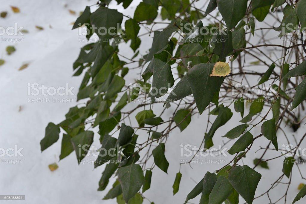 Frozen green leaves. stock photo