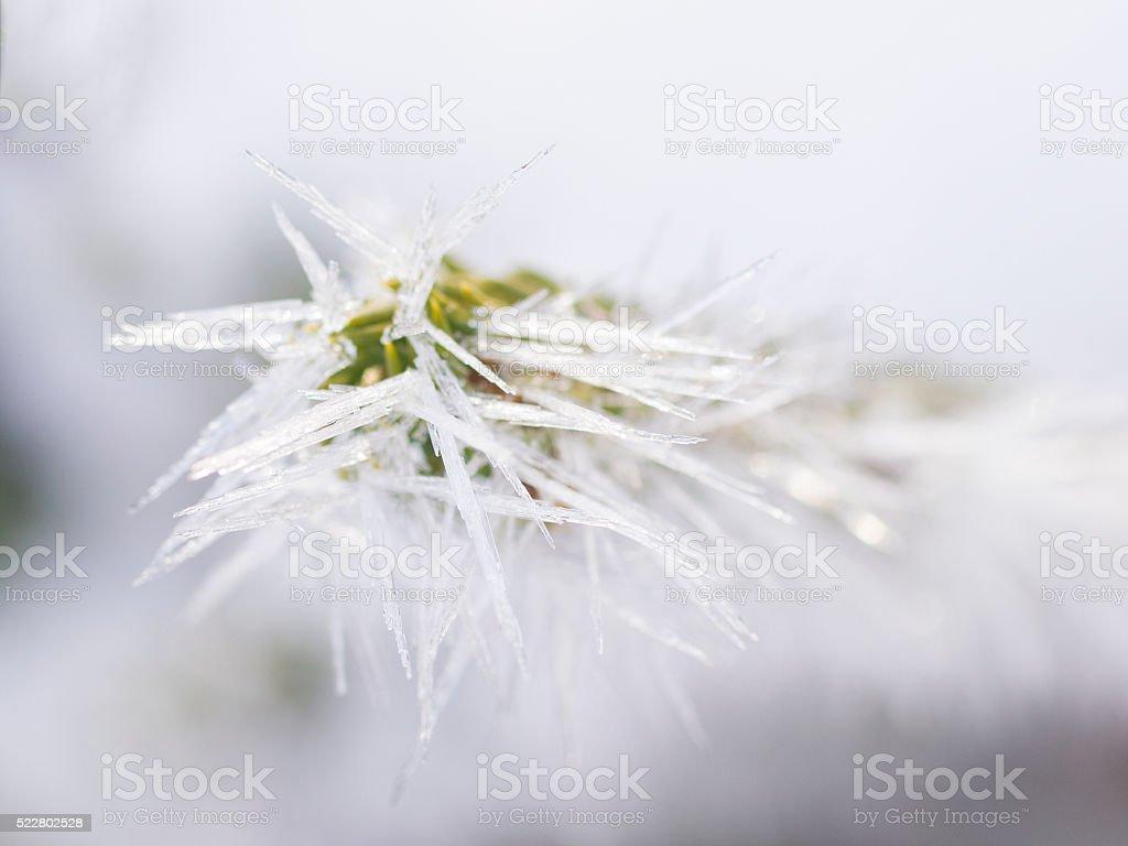 Frozen Ice needles on Hemlock branch on winter time stock photo
