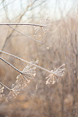 Frozen icy branches, beautiful winter background. Isolated