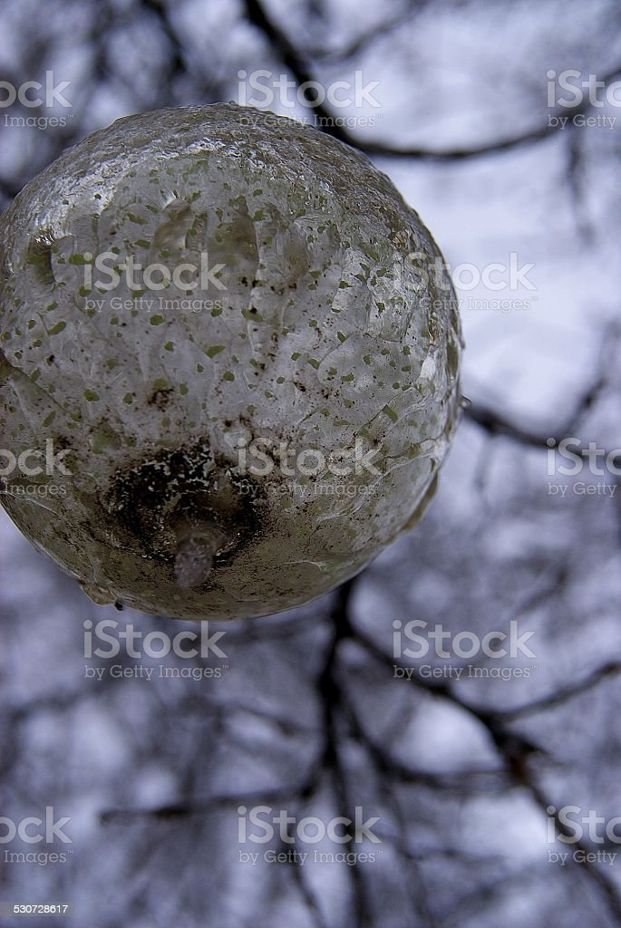 Frozen in the Wind royalty-free stock photo
