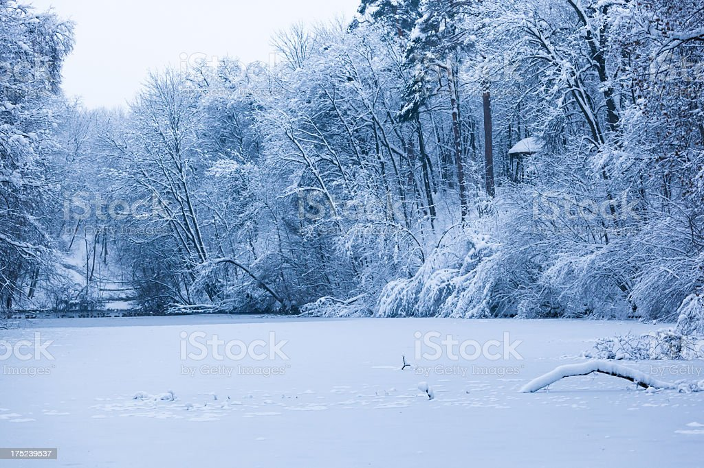 Frozen lake in the forest royalty-free stock photo