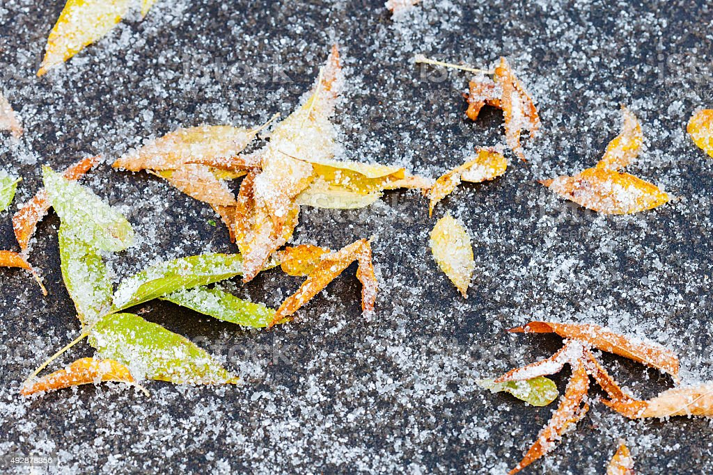 frozen leaf litter under first snow on path stock photo