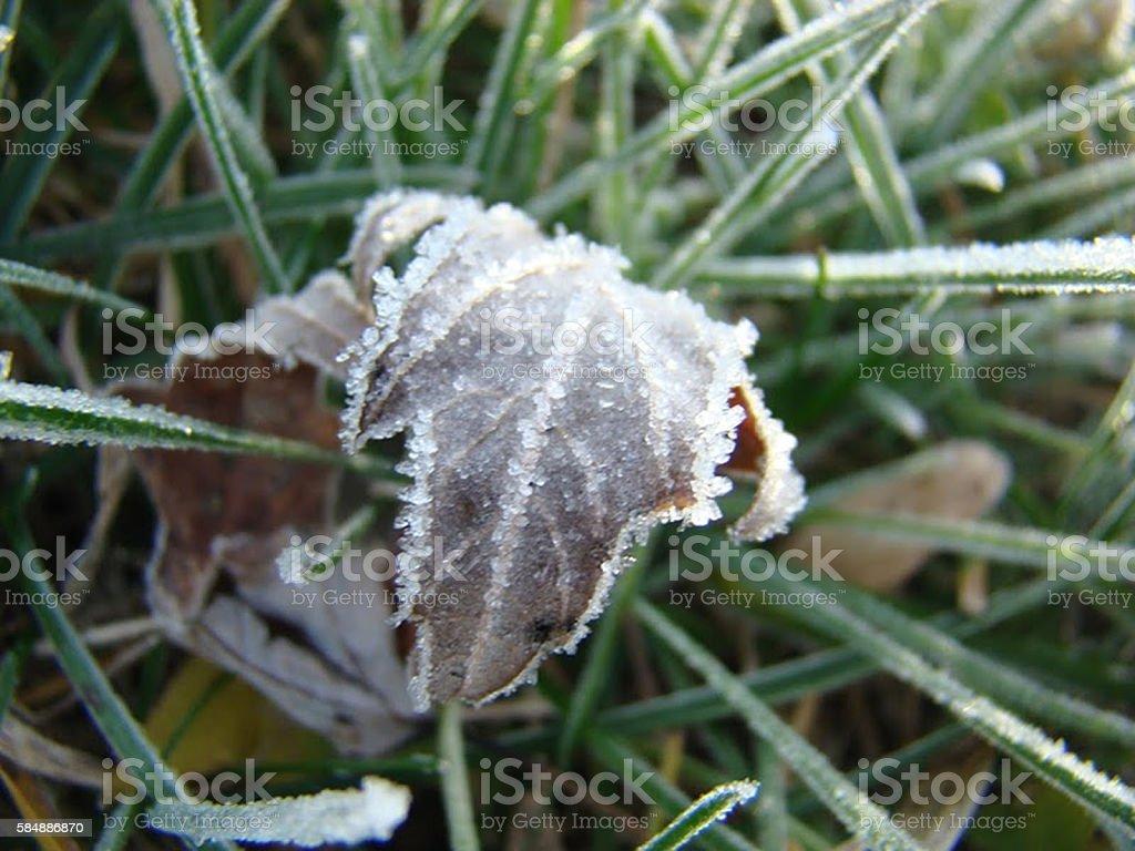 Frozen leaf royalty-free stock photo