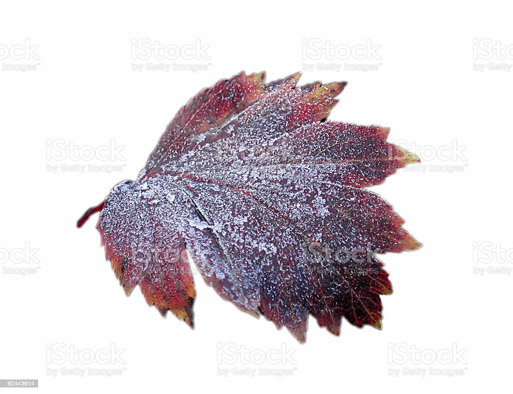 frozen leaf royalty-free stock photo