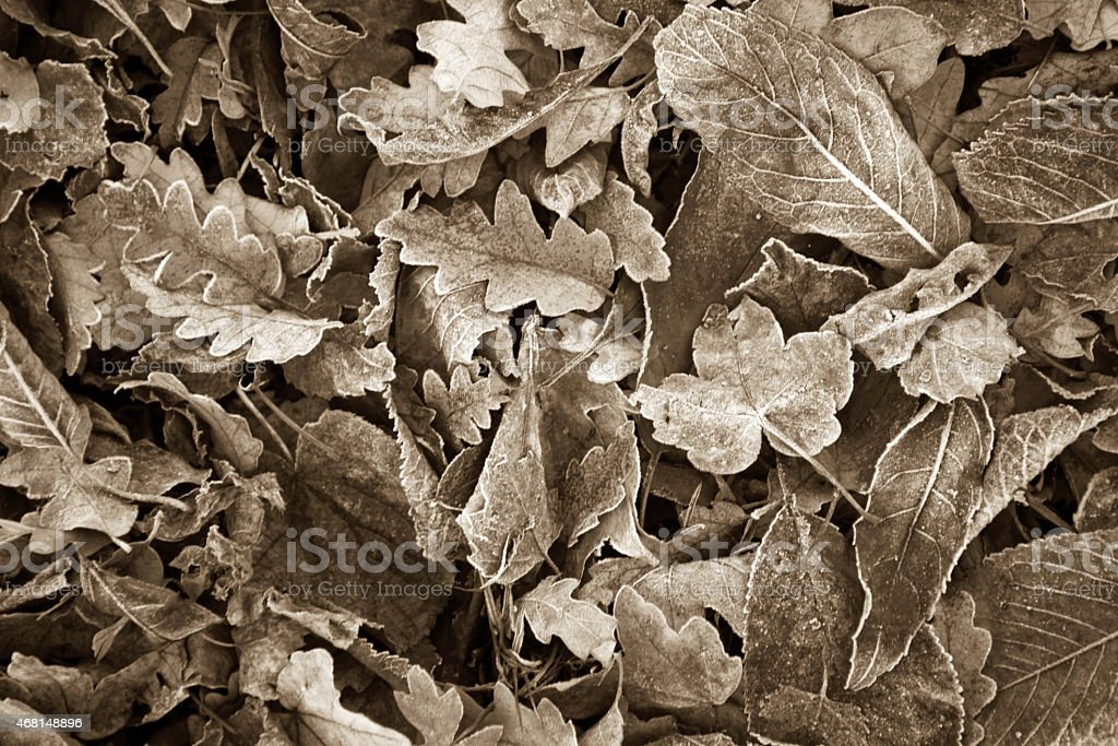 Frozen leaves covered in frost on a park bench stock photo