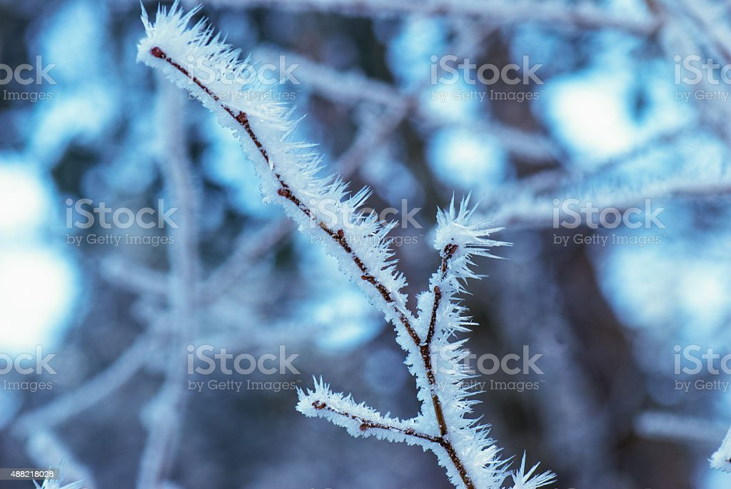 Frozen leaves stock photo