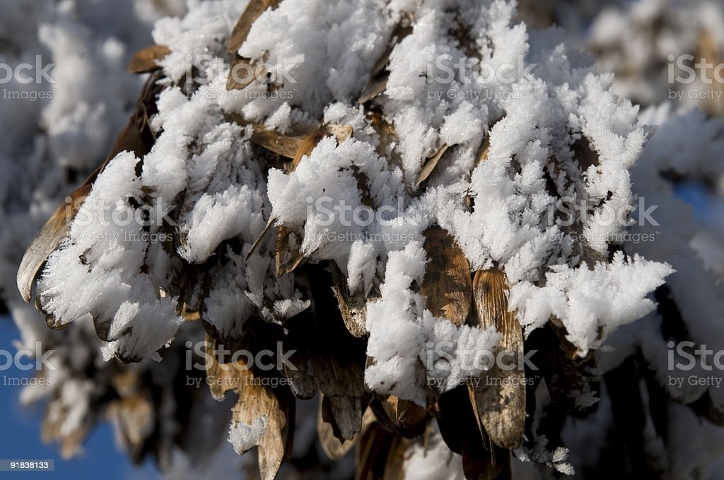 frozen leaves stock photo