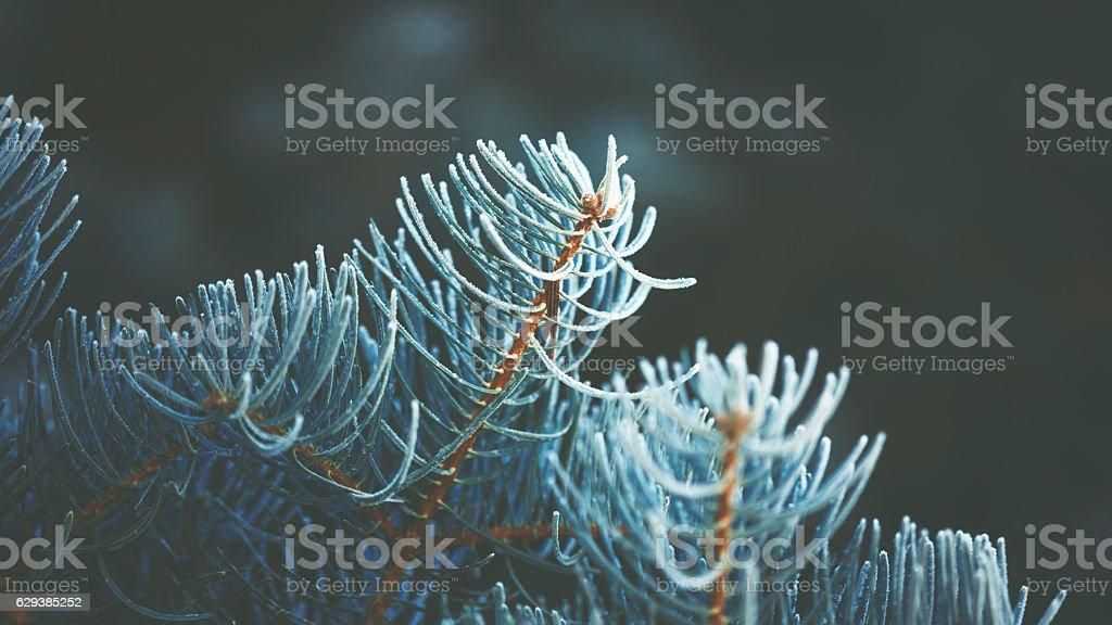 Frozen little twig in the winter light stock photo