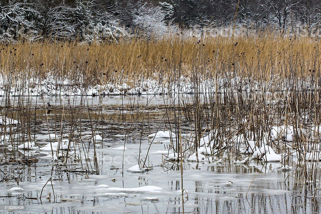 Frozen Marsh along the Patuxent River in Maryland stock photo