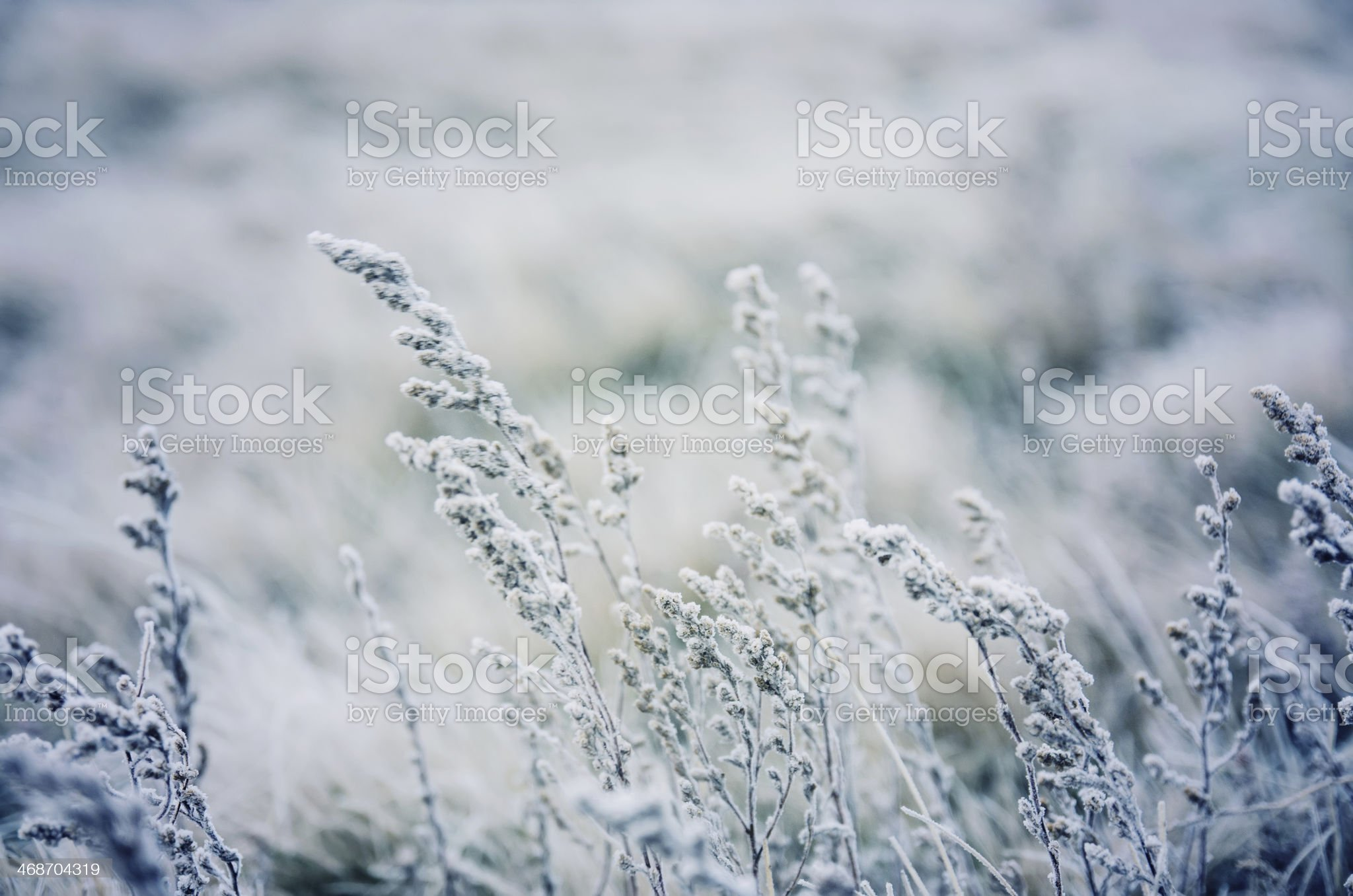 Frozen meadow flower royalty-free stock photo