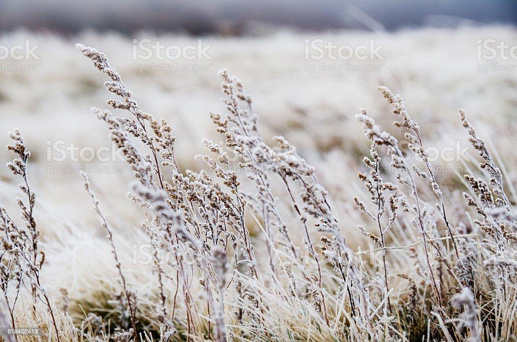 Frozen meadow flower stock photo