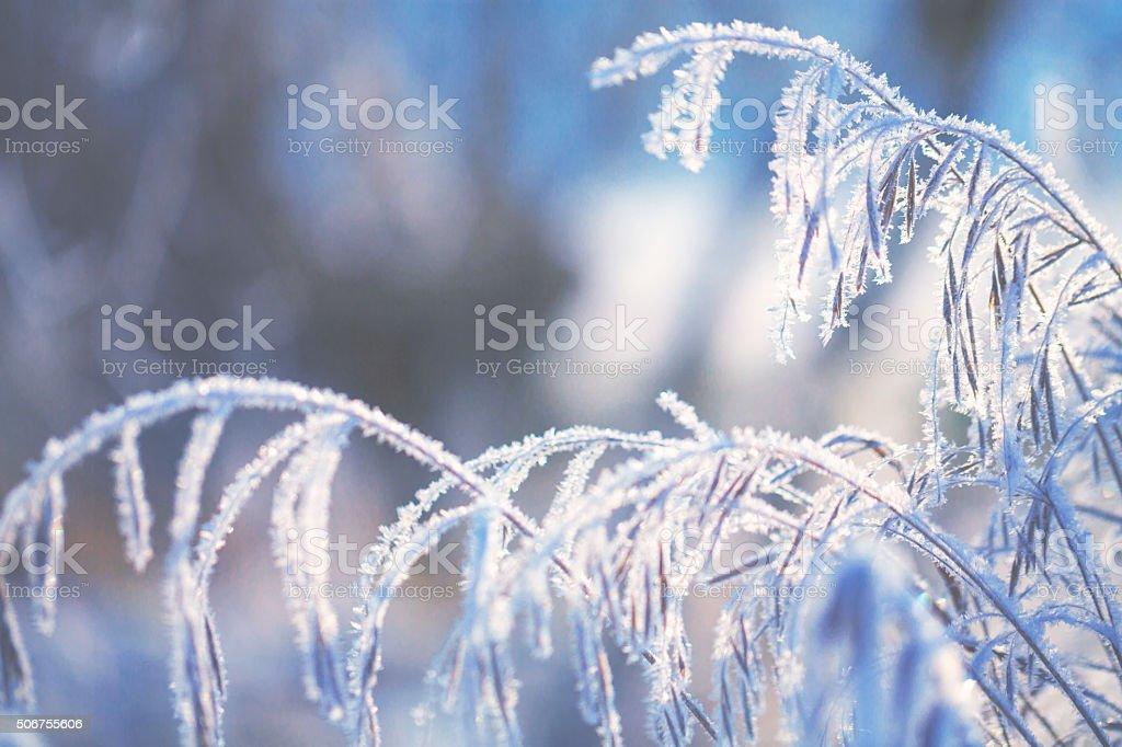 Frozen meadow in winter stock photo