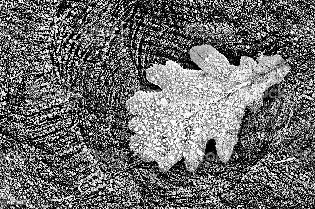 Frozen oak leaf on the hoarfrosted wooden background stock photo