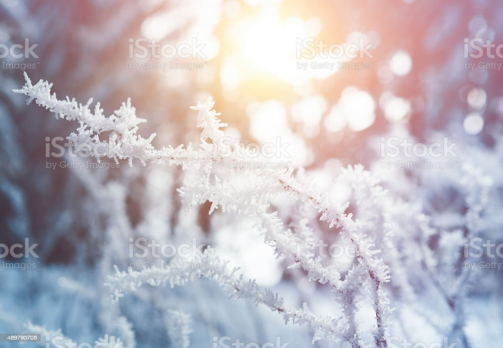 Frozen stock photo