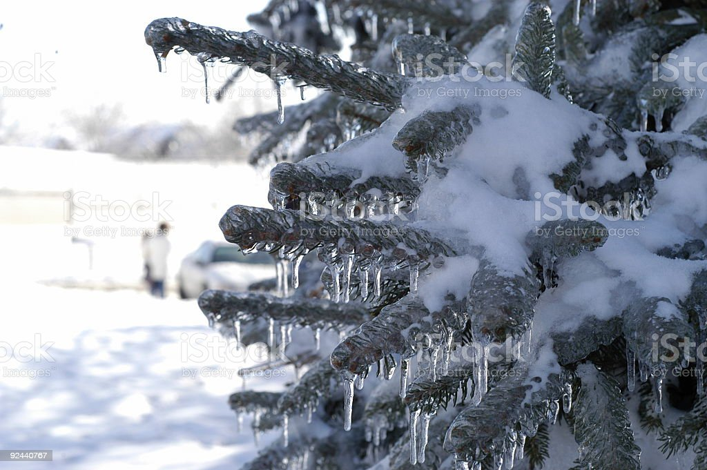 Frozen Pine stock photo