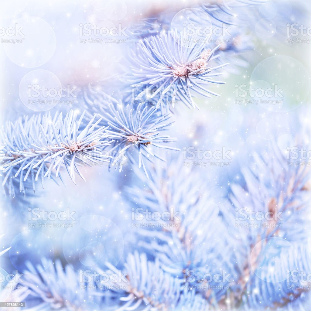 Frozen pine tree background stock photo