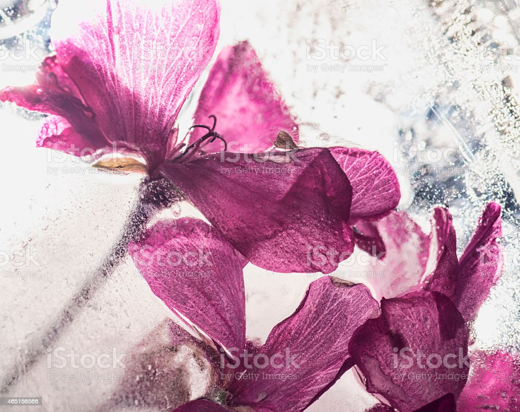 Frozen pink flower stock photo