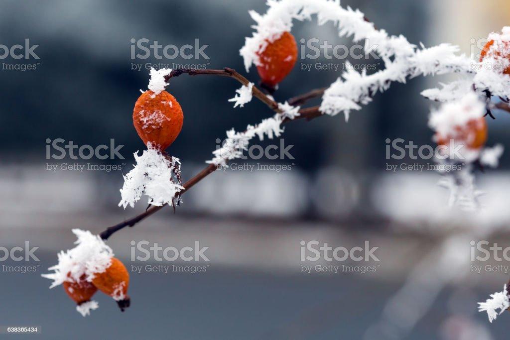 Frozen Plant close up View stock photo