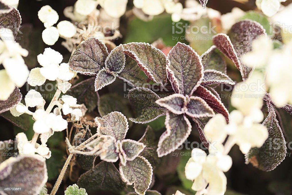 frozen plant royalty-free stock photo