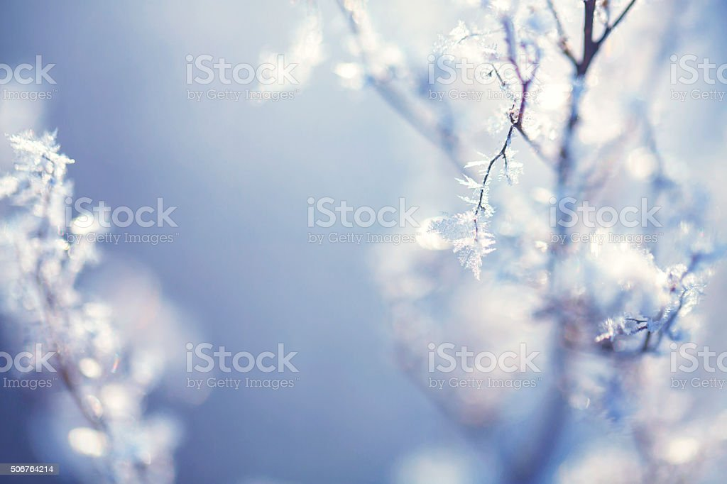 Frozen plants in winter stock photo