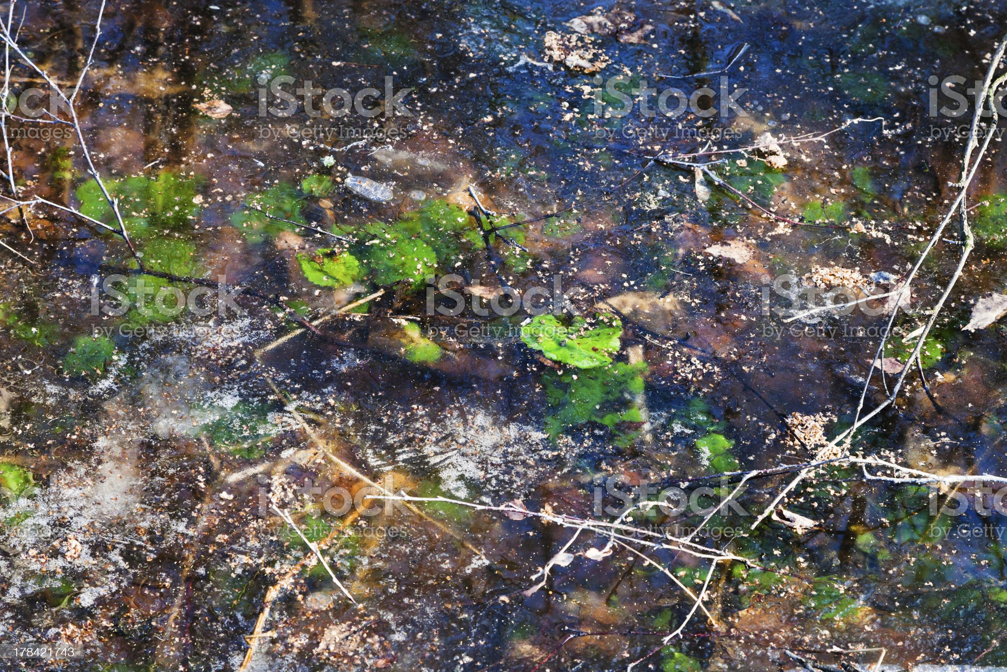 frozen puddle in early spring royalty-free stock photo