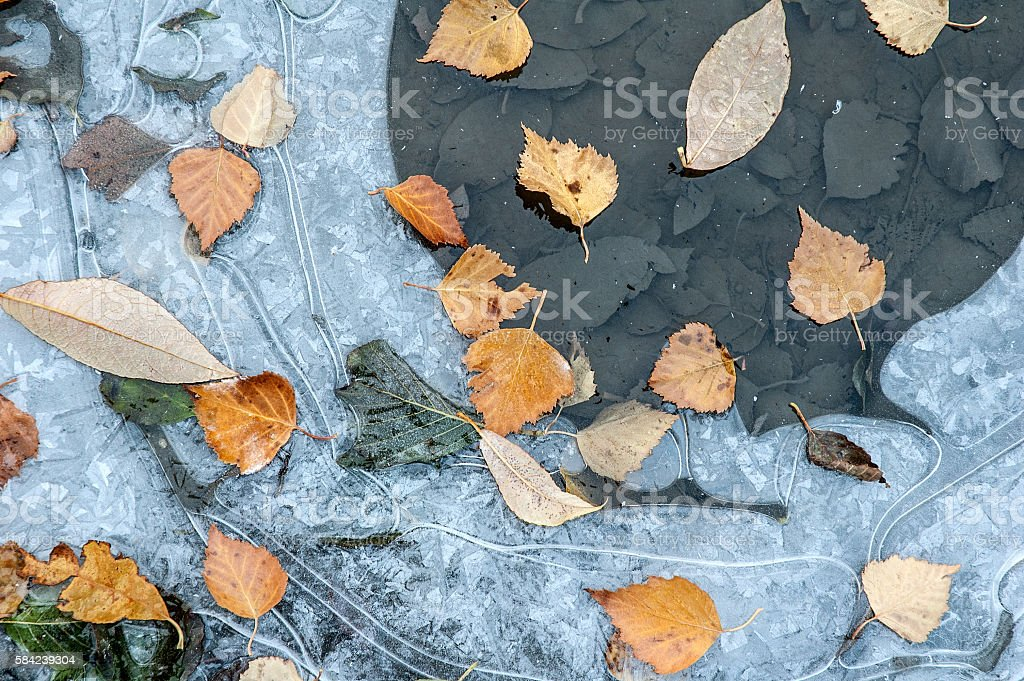Frozen puddle with fallen autumn leaves stock photo