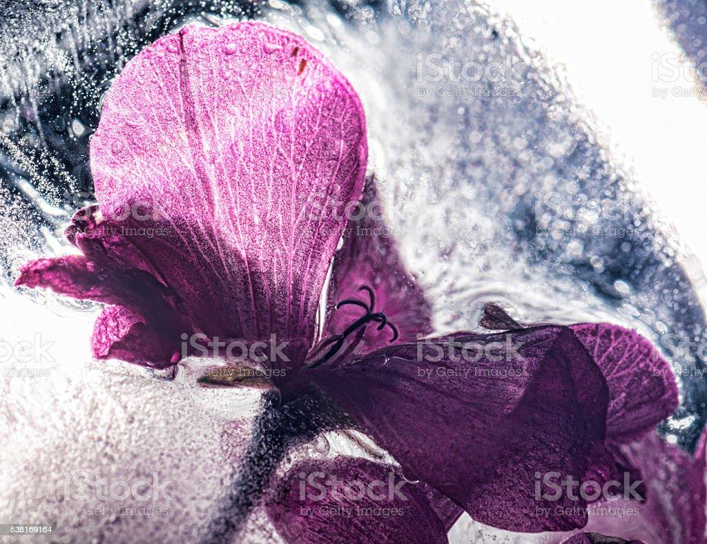 Frozen purple flower stock photo